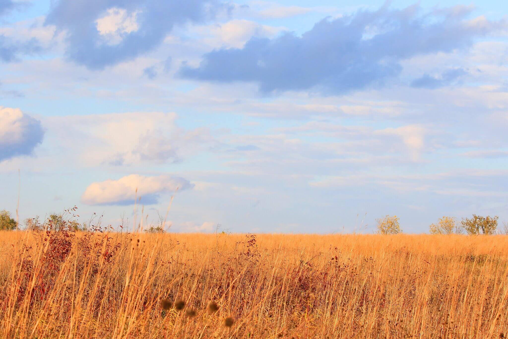 Chipera Prairie Gallery Photo